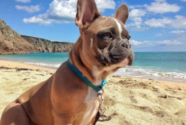 4th-11th July: from £1329 + FREE Dog
